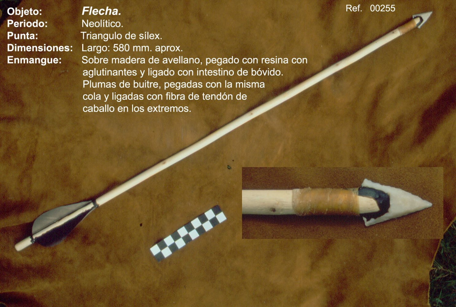 00255 Flecha